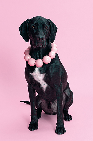 DOG wearing necklace